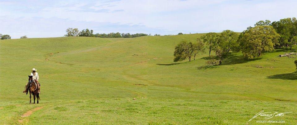 man on horseback in meadow