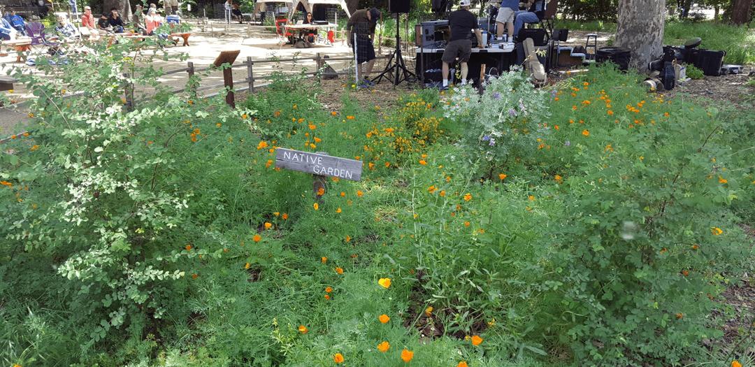 wildflowers in a garden