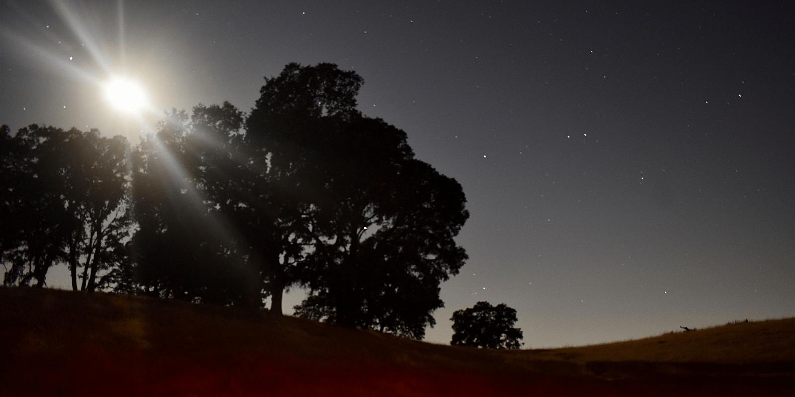 oak trees under a full moon